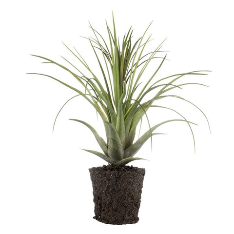 Faux Large Air Plant in Soil H51cm - Greige - Home & Garden - Chiswick, London W4