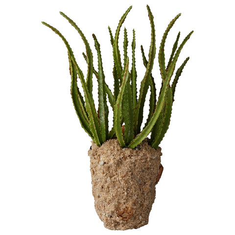Faux Cactus Plant in Soil H21cm - Greige - Home & Garden - Chiswick, London W4