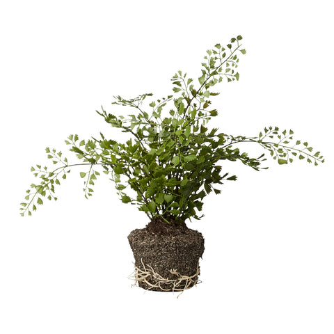 Faux Fern Plant in Soil - Greige - Home & Garden - Chiswick, London W4