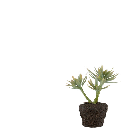 Faux Succulent Plant in Soil - Greige - Home & Garden - Chiswick, London W4