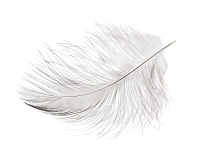 Angels With Love Logo - feather