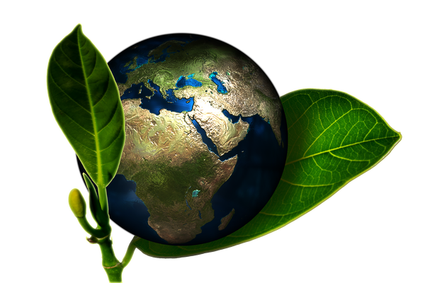 Sustainability trends for Amazon sellers