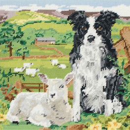 Border Collie and Lamb