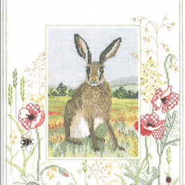 Wildlife - Hare