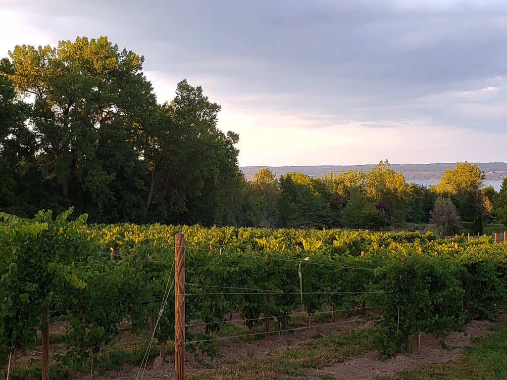 Buttonwood Grove Winery in the Finger Lakes
