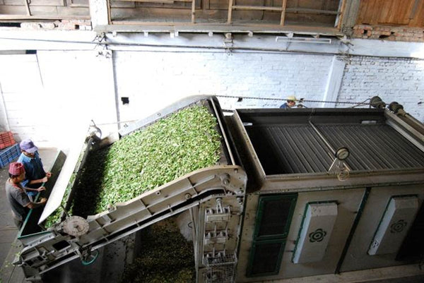Photo of tea drying/firing process