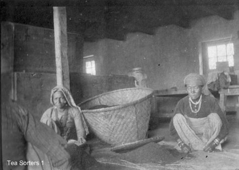 Archival photo of workers in Darjeeling tea factory sorting tea.