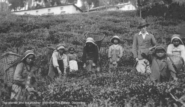 This picture taken at Stienthal tea estate in the 1930s likely includes besides the workers, Stanley Sinclair the last of the Stoelke's in Darjeeling. Hopefully we can get a confirmation from the descendants.