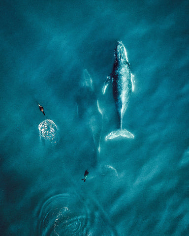 Whales From Above