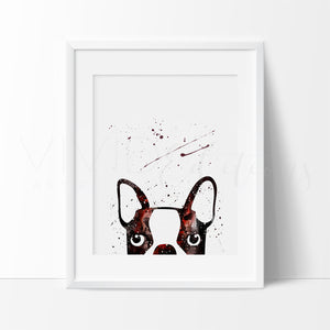 Boston Terrier Peek-A-Boo Art Print - VIVIDEDITIONS