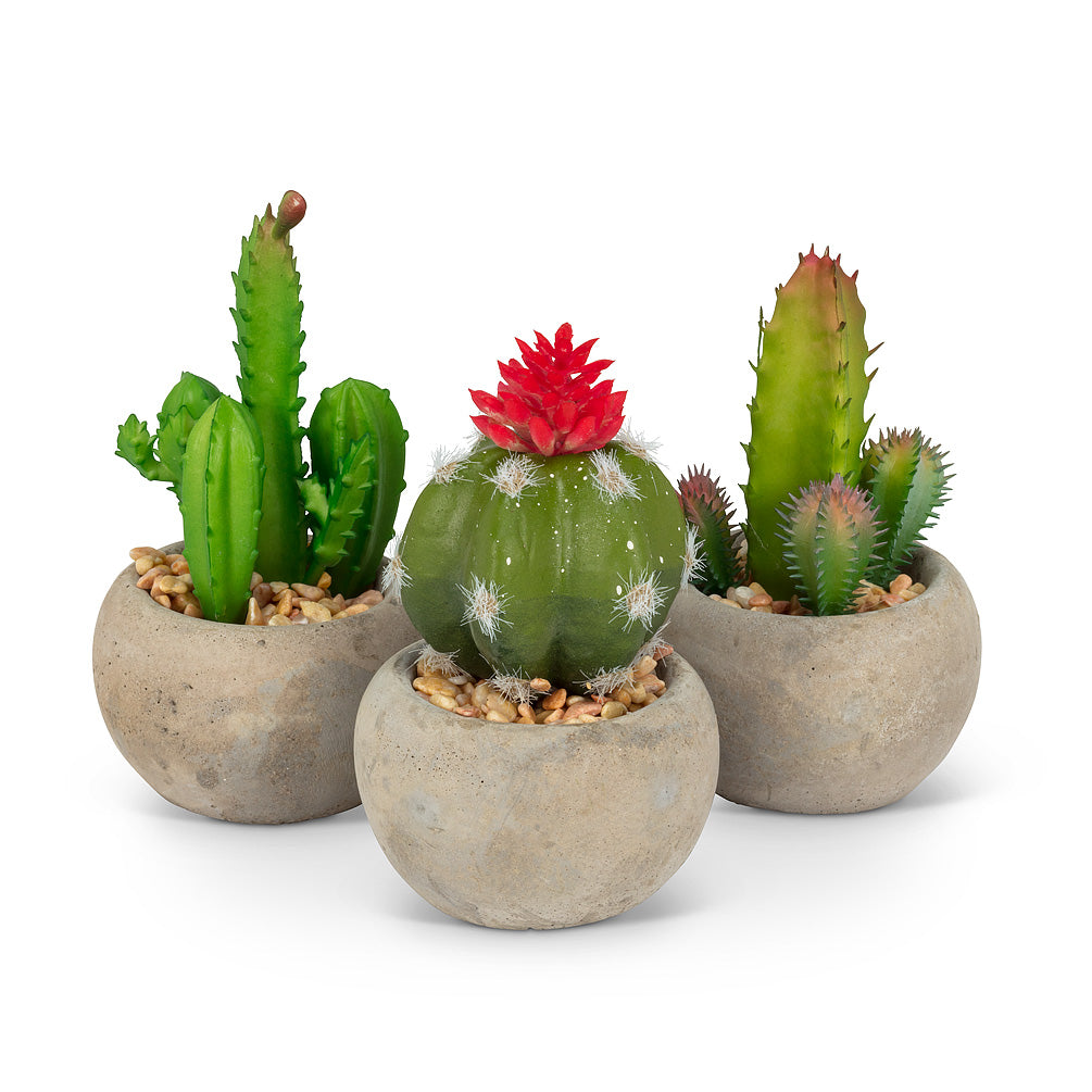 FLOWERING CACTUS SET/3