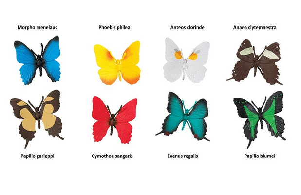 butterfly species models cards montessori child