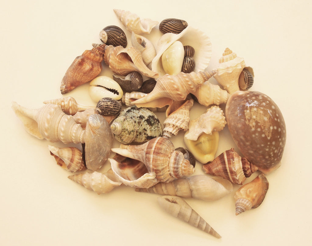 Bag of Assorted Shells (100g)