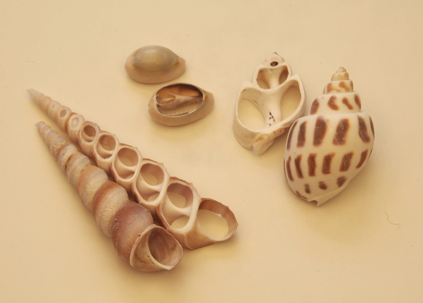 Shell Dissection Set