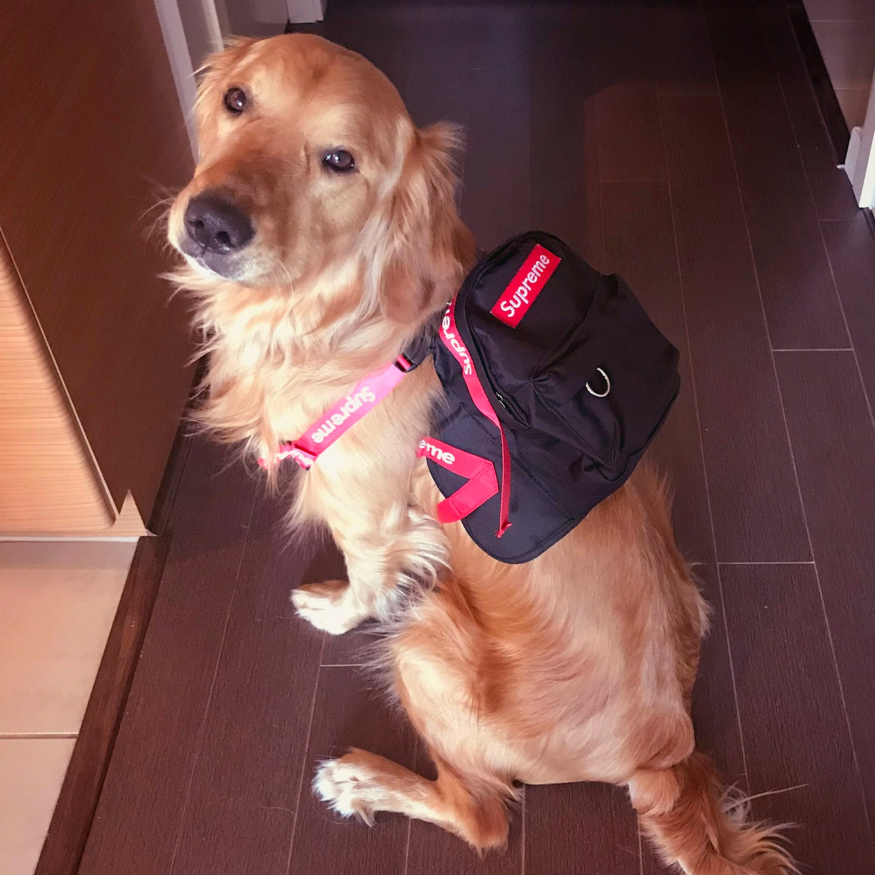 Supreme Dog Backpack