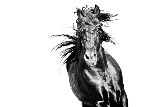 Bravery- Andalusian  Horse