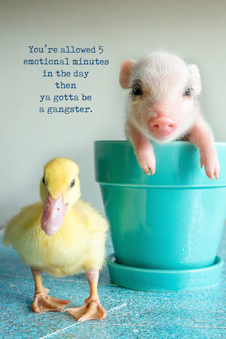 You're allow 30 emotional minutes in a day ... then ya gotta be a gangster (pig and duck)