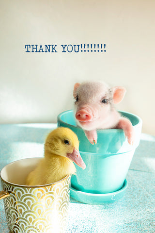 Thank you - ( pig and duck)