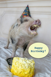 Happy Birthday ( Laughing pig)