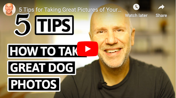 5 Tips for How to Take Great Dog Photos
