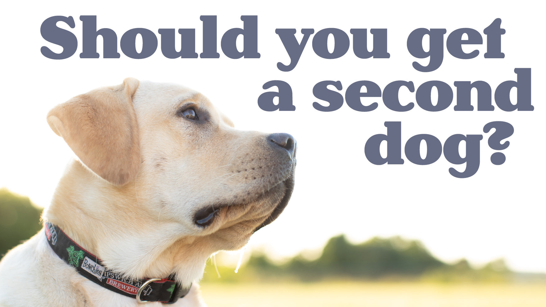 VIDEO - SHOULD YOU GET A SECOND DOG?