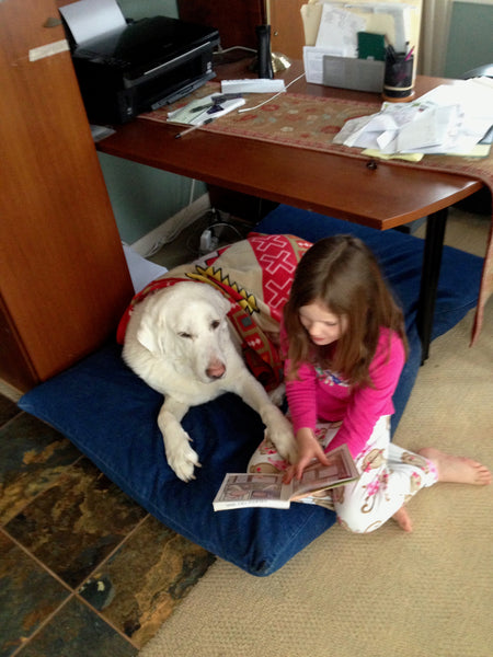 Sam the Akbash and Tess Reading a book together
