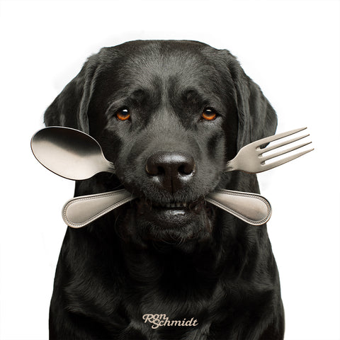 """BONE APPETIT"" Black Labrador Retriever With Fork and Knife in Mouth Wall Art Photo Print for Kitchen, Dining Room, Restuarant, Dog Food, By World's Top Dog Photographer Ron Schmidt"