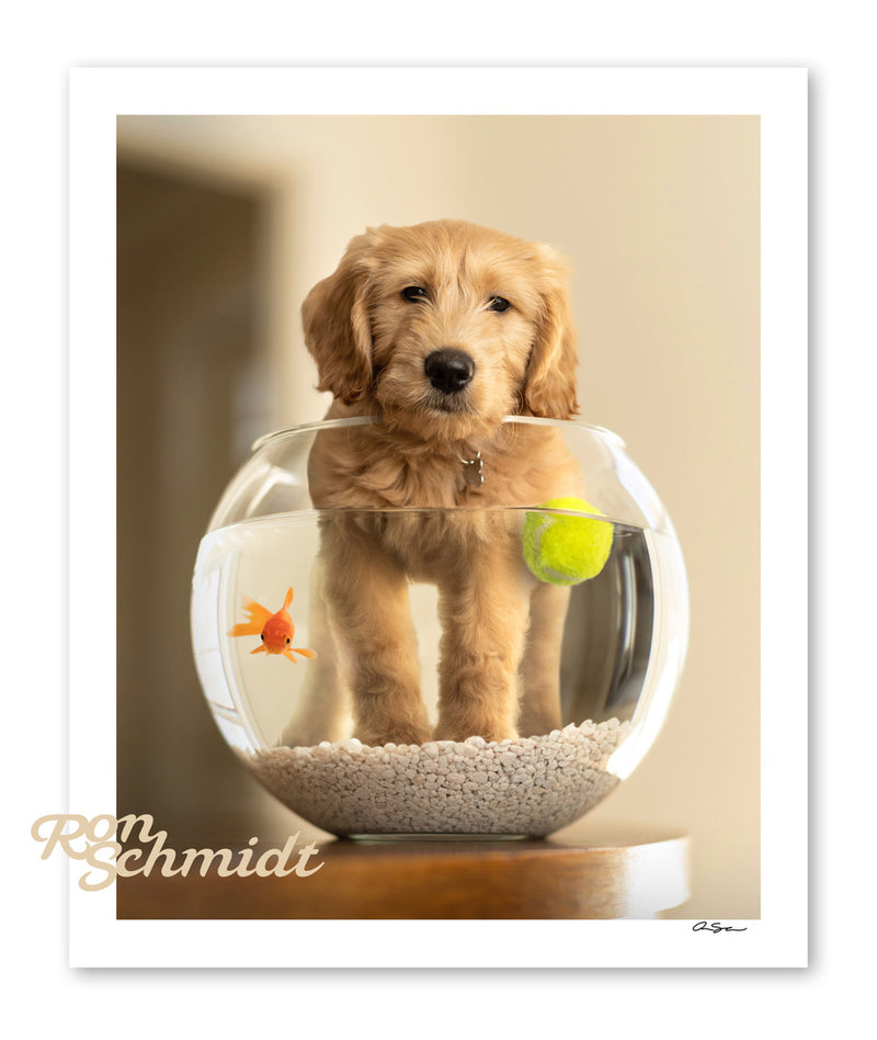 "Limited Edition Signed Print  - ""Moby"" Goldendoodle Art by Ron Schmidt"