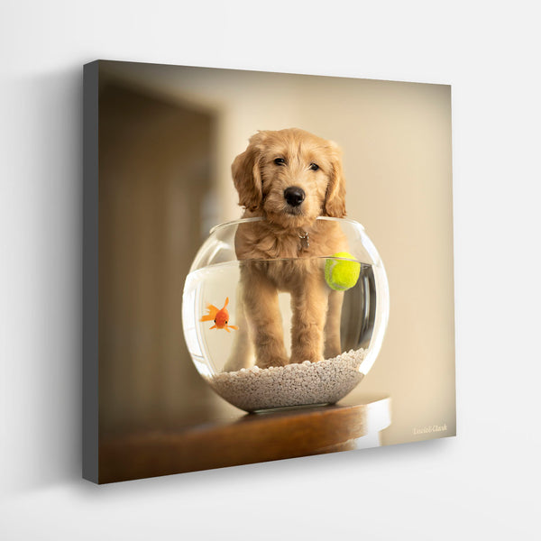 """MOBY"" Goldendoodle Art"