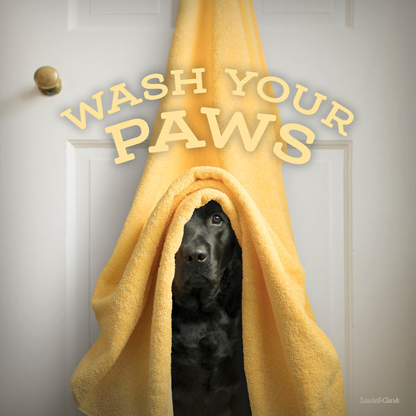 Wash your paws, Black Labrador Retriever, Do Peeking out from yellow towel, Canvas Dog Art Print for Bathroom, Powder Room, Kids bathroom Wall Decor