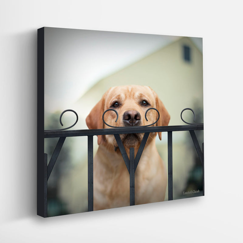 """WATSON"" Yellow Labrador Retriever Art"