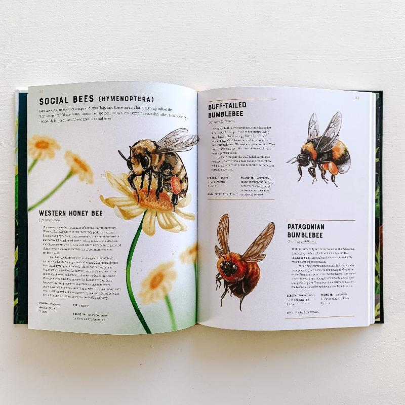 Encyclopedia of Insects Books The Wonder Cabinet