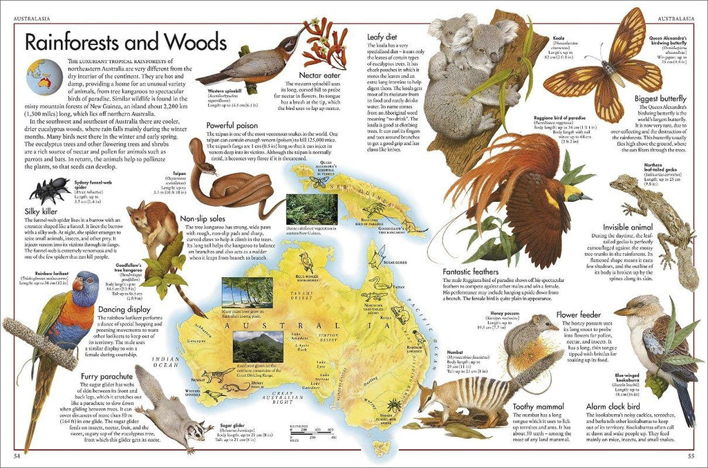 The Animal Atlas Books The Wonder Cabinet