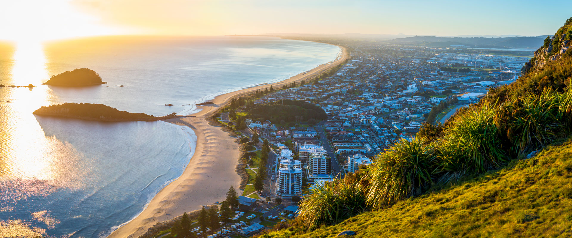 The Pineapple is based in Tauranga near Mount Maunganui and supplies Arizer Vapes, DynaVap Vapes, PAX Vapes, SLX Grinders, and Storz & Bickel Vapes