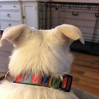 "Rainbow Animal print cat & small dog collar 1/2"" wide adjustable handmade bell - Furrypetbeds"
