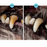 Pup Smile™ Dog's Teeth Cleaning Kit
