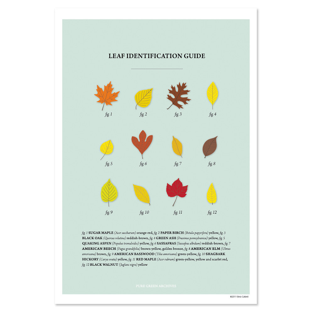 Leaf Identification Print
