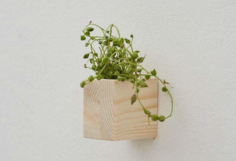 These small wooden wall planters make a great feature on any wall, particularly when grouped together. We think they would make great stocking fillers. Made form recycled wooden pallets, the little wall planters come with a small screw and wall plug, and are really easy to attach in place. The planters are perfect for small potted plants like succulents and cactus plants.