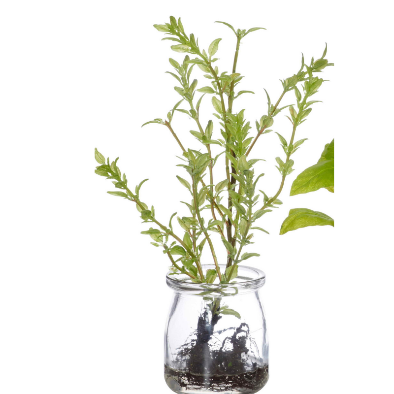 Herbs in Water