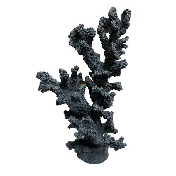 Tree coral