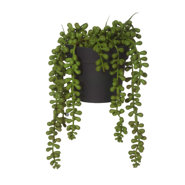 String of pearls pot