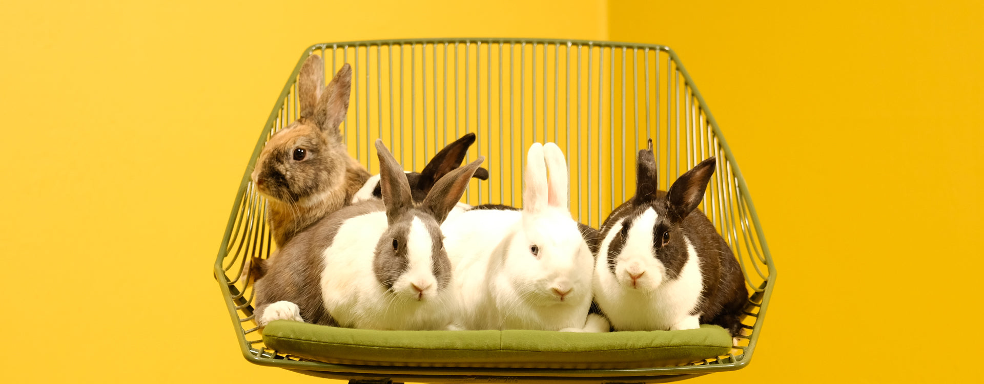 THE BUNNY LOUNGE: SPECIAL EDITION