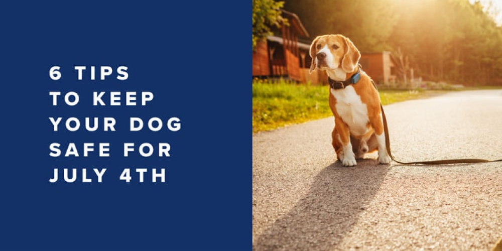 6 Tips to Keep Your Dog Safe for July 4th | Whistle