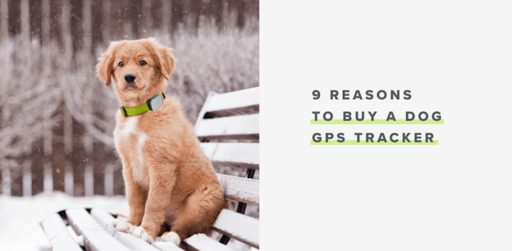 9 Reasons to Buy a Dog GPS Tracker | Whistle