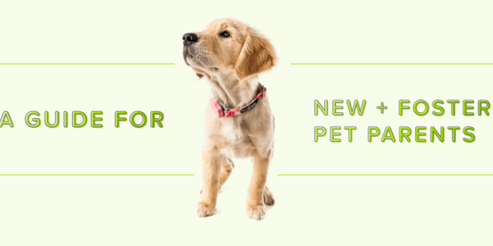 A Guide for New & Foster Pet Parents | Whistle