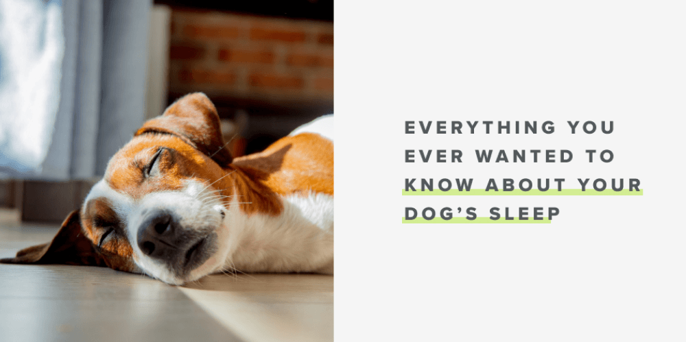 Everything You Ever Wanted to Know About Your Dog's Sleep | Whistle