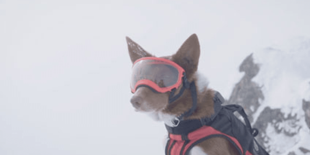 Get ready to celebrate canine bravery in 'Superpower Dogs' | Whistle
