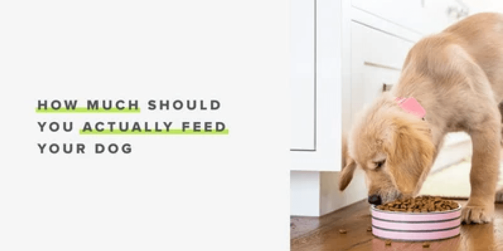 How Much Should You Actually Feed Your Dog? | Whistle