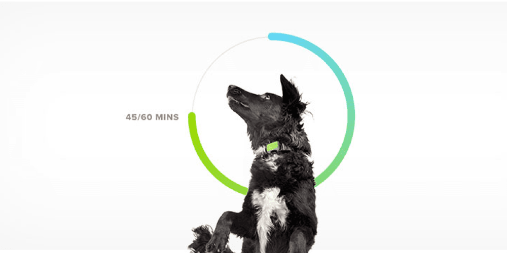 Meet Whistle FIT for pet health, fitness, and nutrition | Whistle