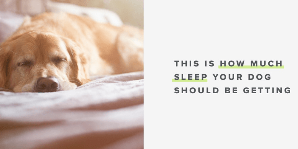 SOLVED! This Is How Much Sleep Your Dog Actually Needs | Whistle